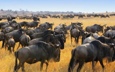 Safari en Kenia todo incluido