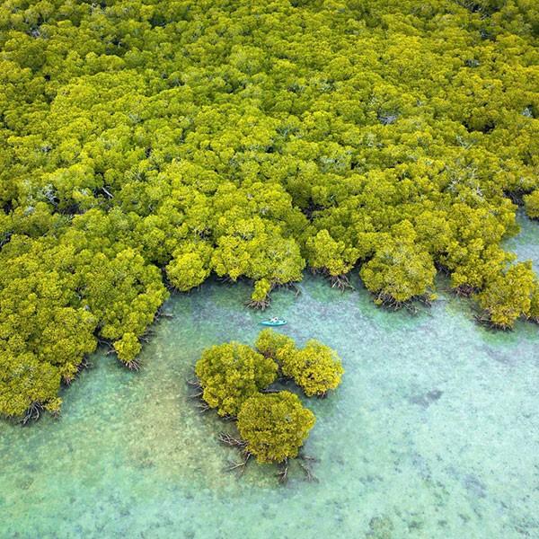 Orpheus island vista aerea