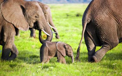 Safari en Kenia con niños