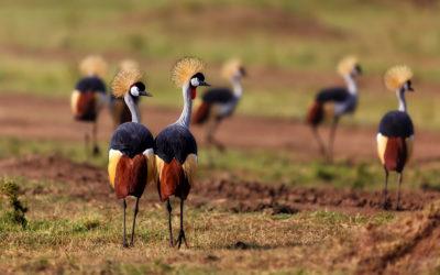 Safari en Kenia y Seychelles