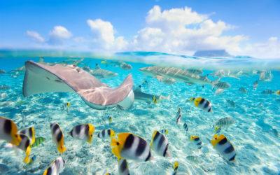 The Residence: buceo en Maldivas