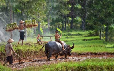 Norte de Vietnam y Sapa
