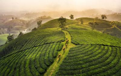 Vietnam desconocido: las Tierras Altas