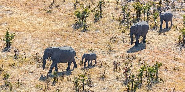 Sobrevuelo en helicóptero de Savuti en el safari de lujo Botsuana