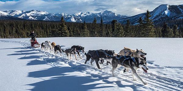 Trineo de perros en Alaska