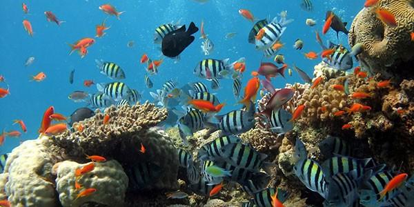 Arrecife de coral en Hawai