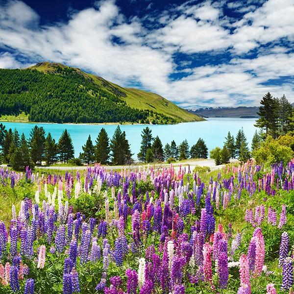 Lago Tekapo en la isla Norte de Nueva Zelanda