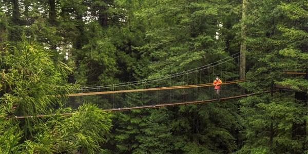 Redwoods Treewalk en Rotorua