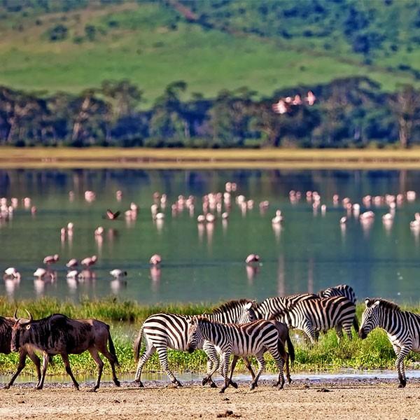Safari privado en el Cráter del Ngorongoro