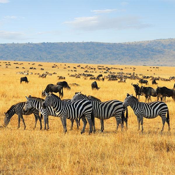 Serengueti entre Kenia y Tanzania