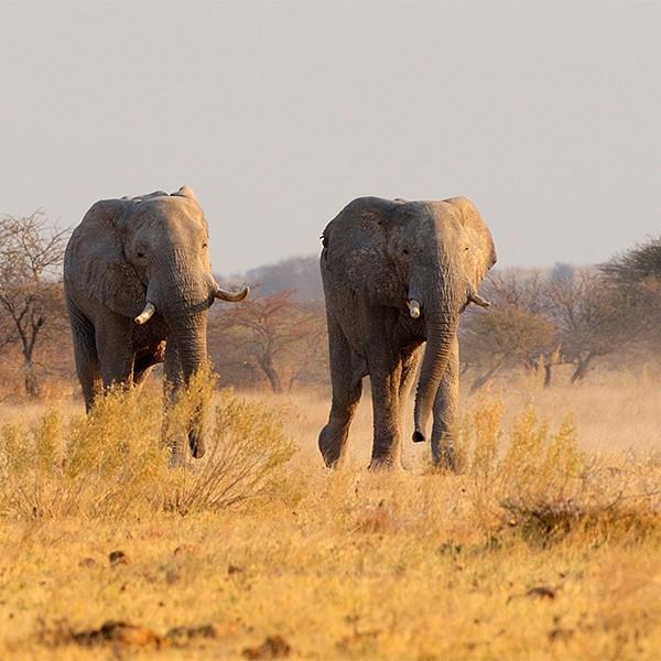 Área de Savuti en el Parque Nacional de Chobe