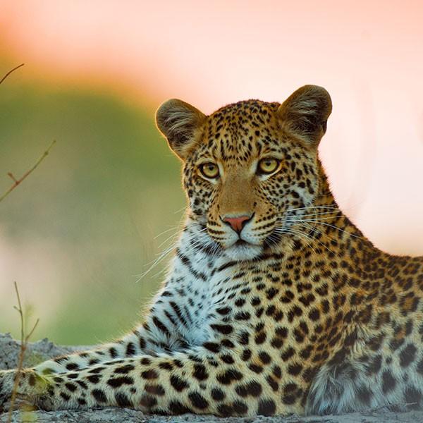 Safari de lujo en el Parque Nacional de Moremi Botsuana