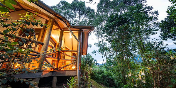 Gorilla Safari lodge en Bwindi