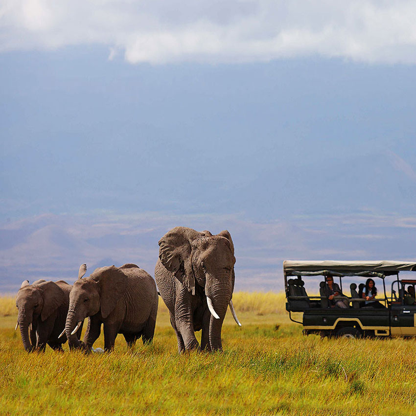 Safari en Amboseli Elewana Tortilis Camp