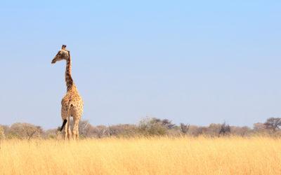 Safari de lujo en Botsuana