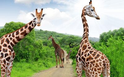 Safari de lujo en Sudáfrica