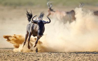 Sudáfrica con safari en español