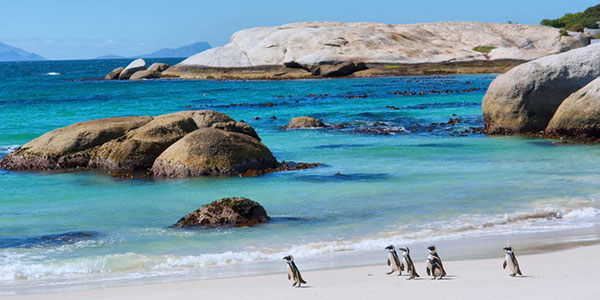 Pingüinera de la playa de Boulders