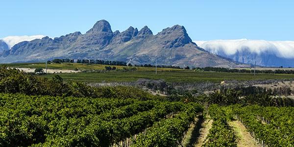 Viñedos en la región del Cabo en Sudáfrica
