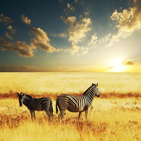 Safari de lujo en Sudáfrica, Reserva de Sabi Sabi