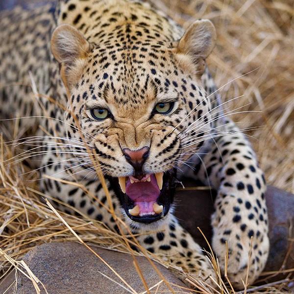 Safari en español en el Parque Kruger de Sudáfrica
