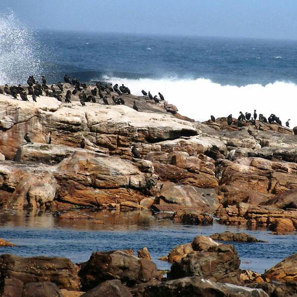 Focas en Península del Cabo