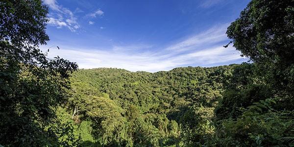 Bosque Uganda