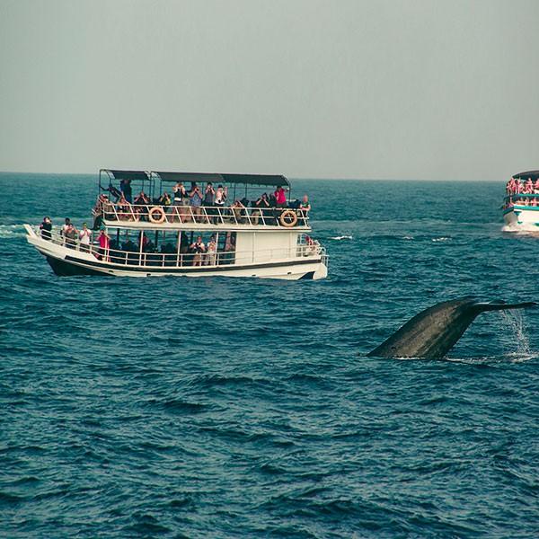 Excursión para ver ballenas en Sri Lanka