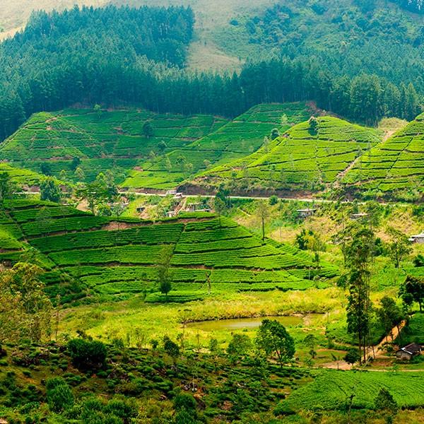 Vista panorámica de Nuwara Eliya, Sri Lanka