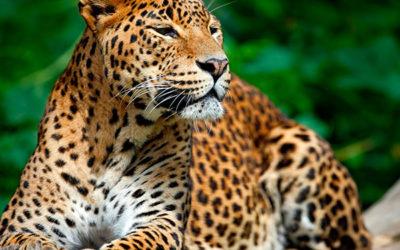 Sri Lanka: lujo en la naturaleza