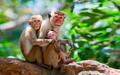 Sri Lanka con niños