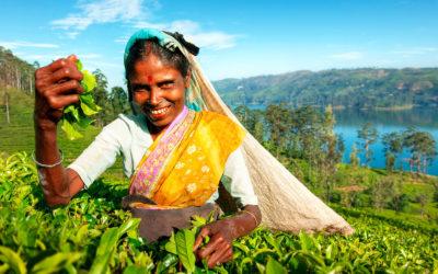 Sri Lanka: trekking y aventura