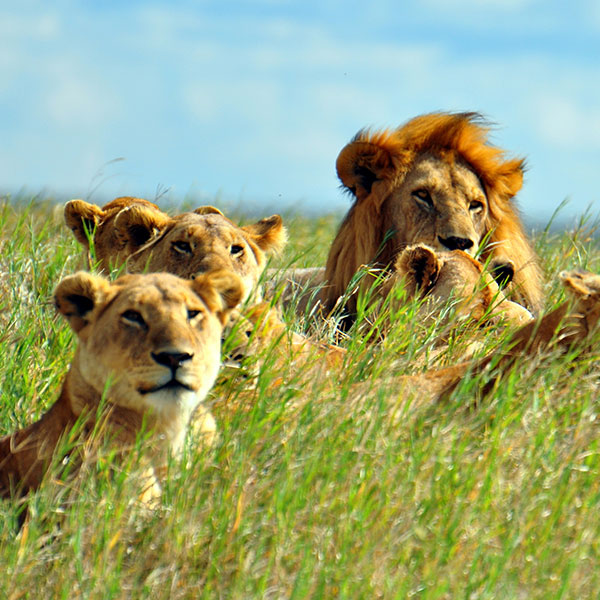 Safari en Serengueti Sur