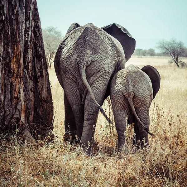 Safari privado en Tarangire, Tanzania