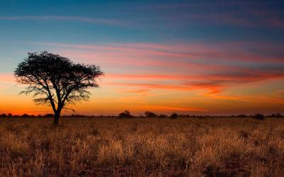 Serengueti, Ngorongoro y Selous