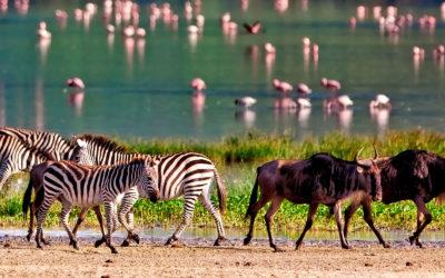 Tanzania: 4 días de safari