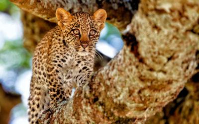 Safari privado en Tanzania