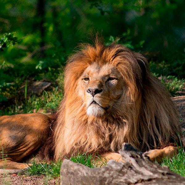 Safari en la Reserva de Selous en Tanzania