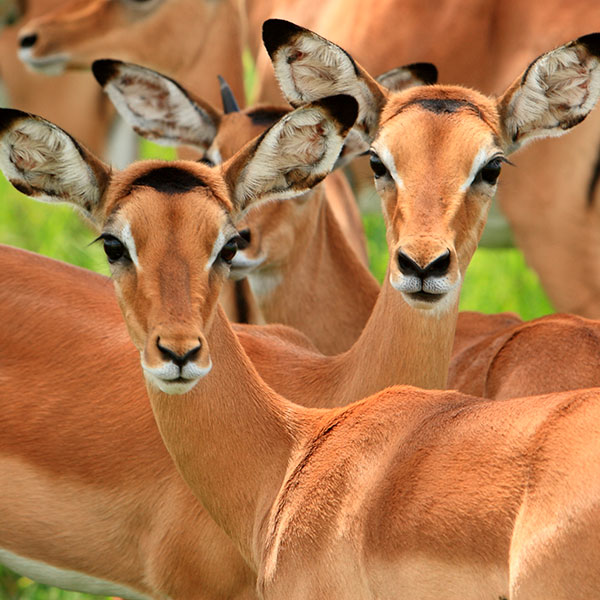 Parque Nacional del Ngorongoro