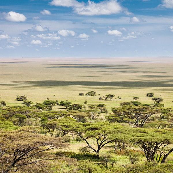 Safari en el Parque Nacional del Ngorongoro