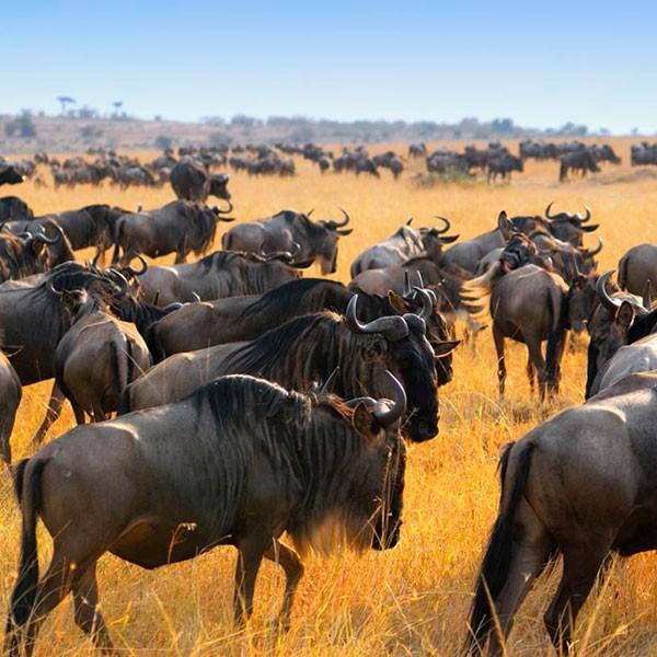 Safari privado en Serengueti Tanzania