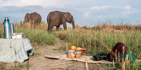Elefantes en Tigertops en Chitwan
