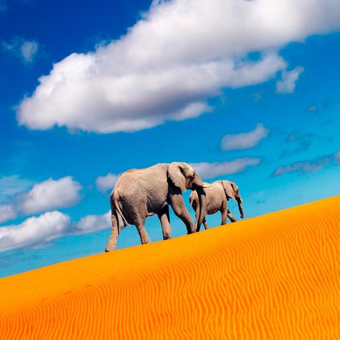 Viajes para ver elefantes a Namibia