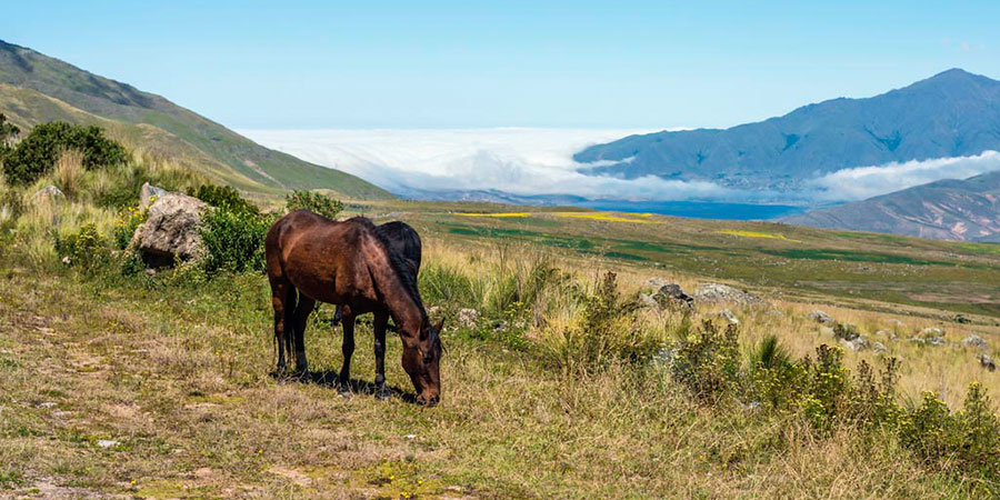 Noroeste de Argentina, Tafí
