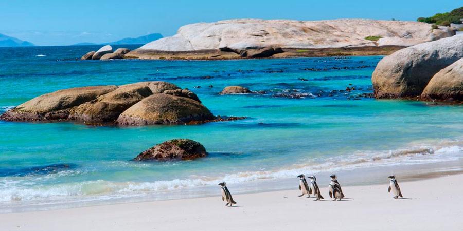 Pingüinos en la playa de Boulders