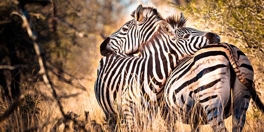 Safari en familia para ver cebras en Sudáfica