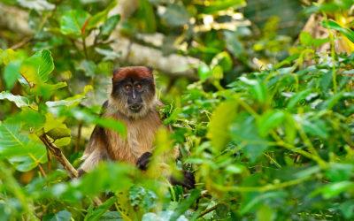 Uganda: safari y ecoturismo activo