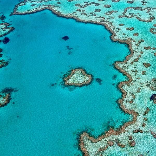 Cairns, Gran Barrera de coral